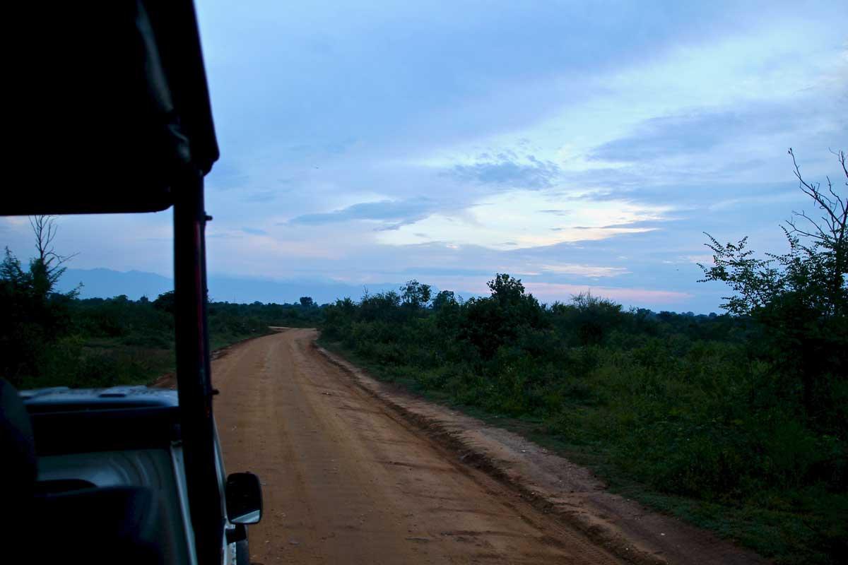 jeep safari Udawalawe Sri Lanka
