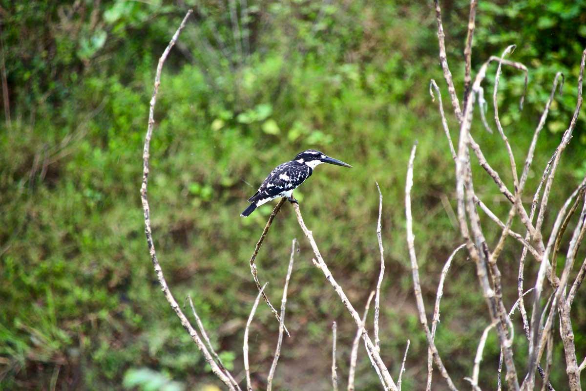 oiseau Udawalawe Sri Lanka