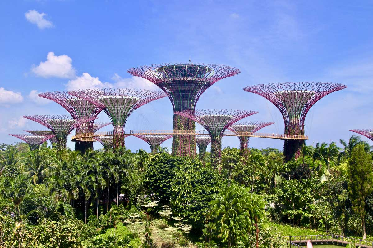 singapour Gardens by the Bay arbres
