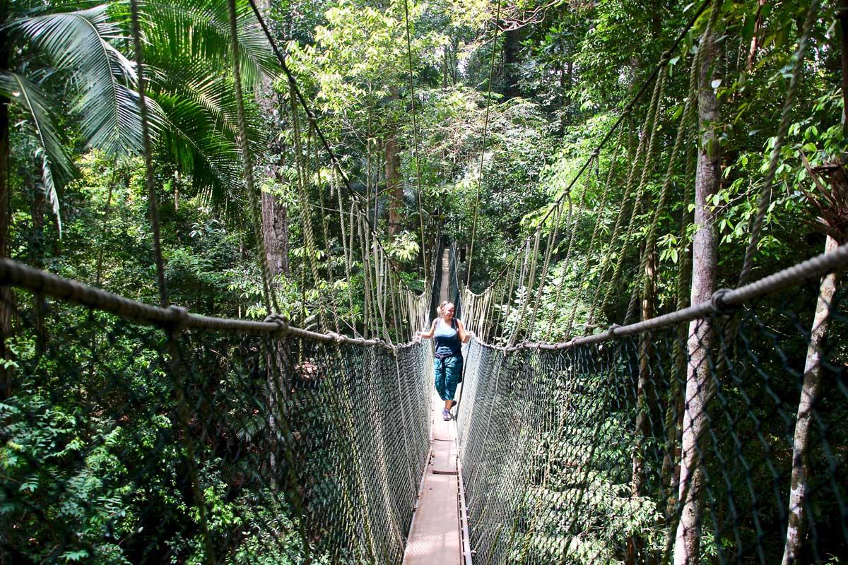 À la découverte de la jungle de Taman Negara : 2 jours de trek