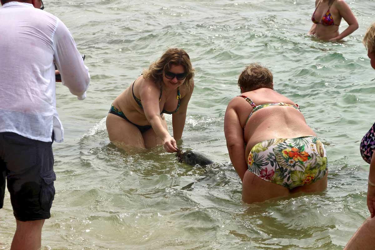 tortue plage Hikaduwa Sri Lanka