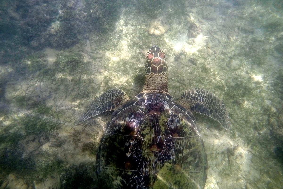 vue en haut plage Polenha Sri Lanka