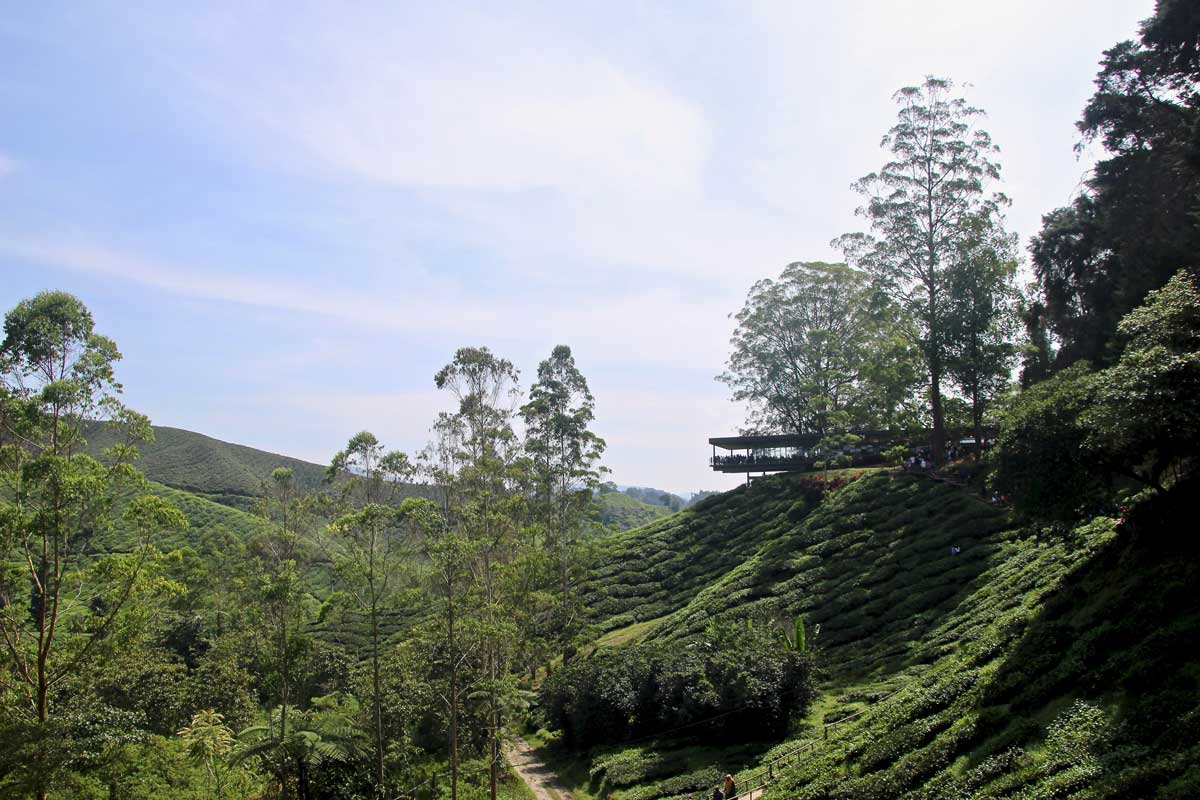 plantations de thé boh cameron highlands