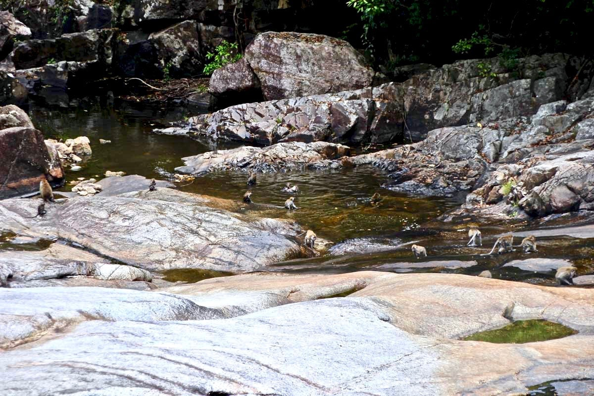 singes cascades Langkawi