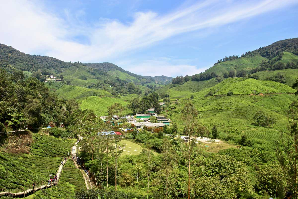 thé boh cameron highlands
