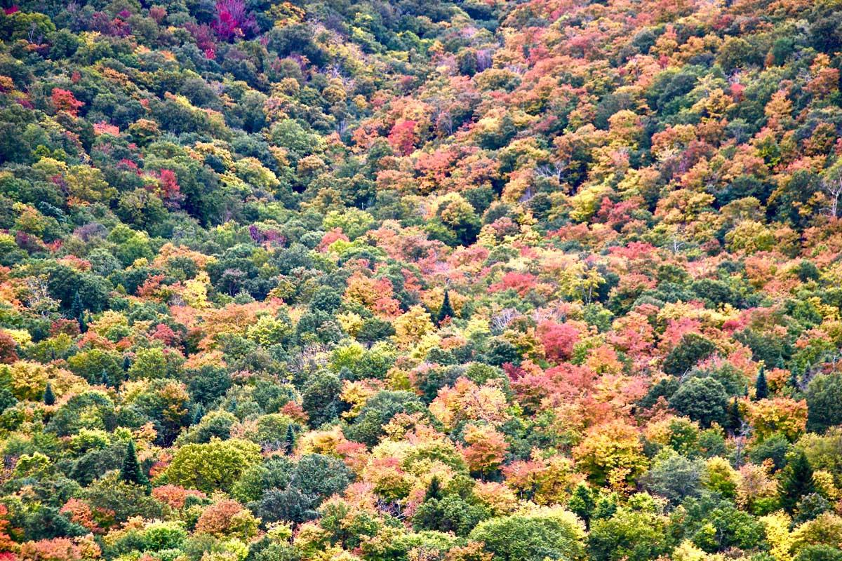 couleurs sutton automne