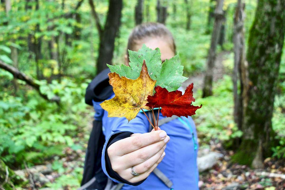 feuilles couleurs parc sutton