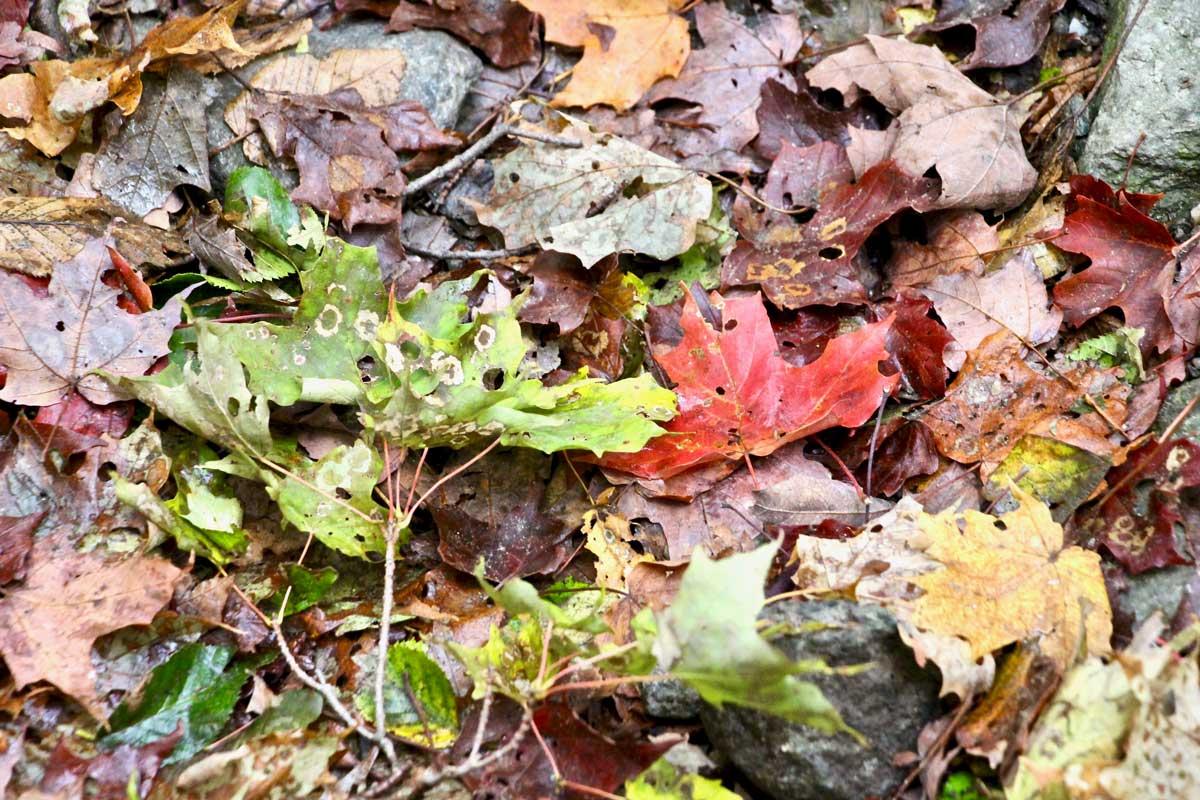 couleurs automne parc sutton