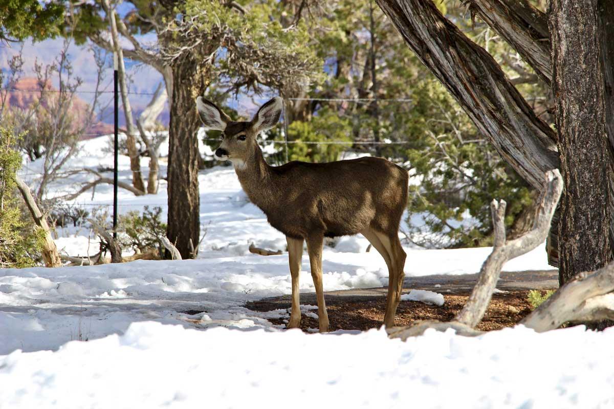 animal sauvage hiver