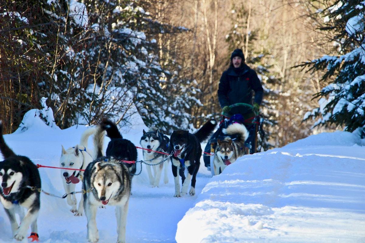 balade chiens traineau kanatha-aki laurentides