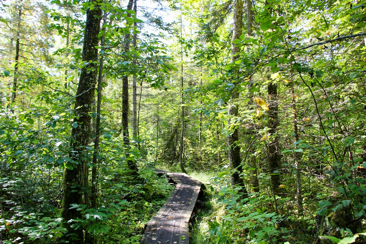 Balade parc national du Fjord du Saguenay Quebec