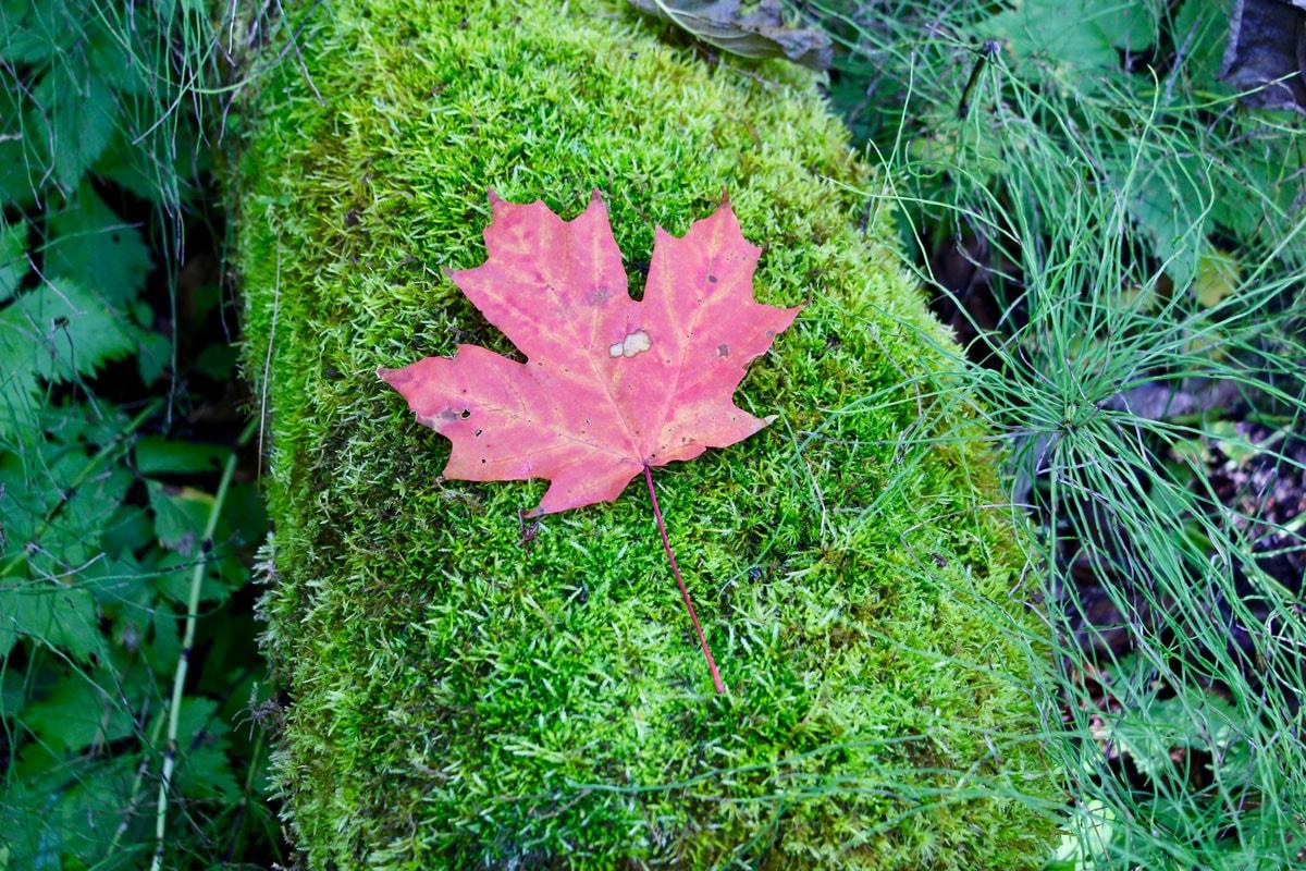 Statut implicite après notre PVT Canada : assurance, NAS, employeur...