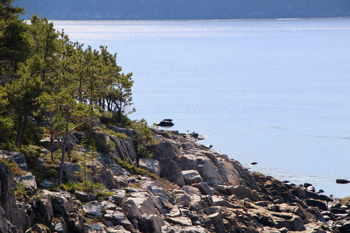 phoque Fjord-du-Saguenay Canada