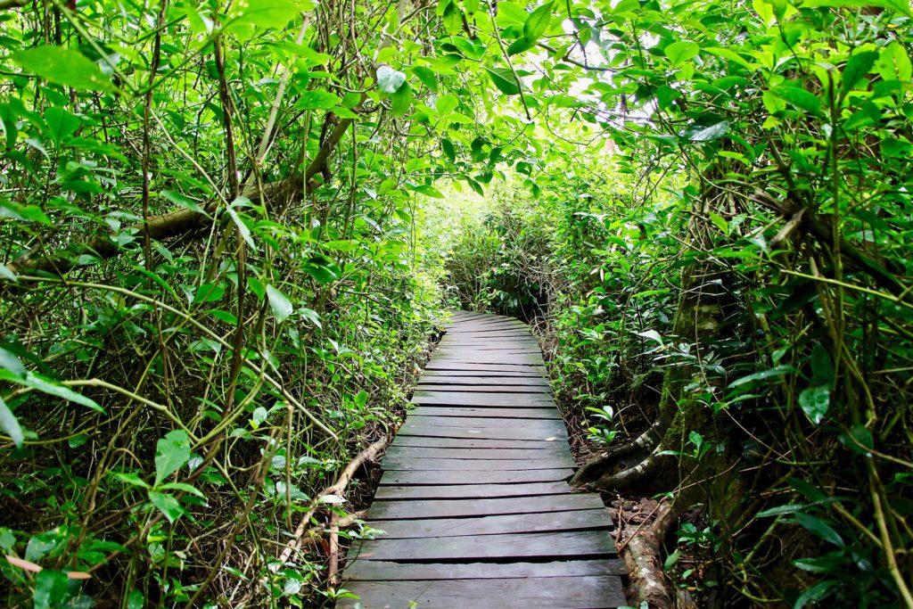 Boardwalk réserve Sian Ka'an Tulum Mexique