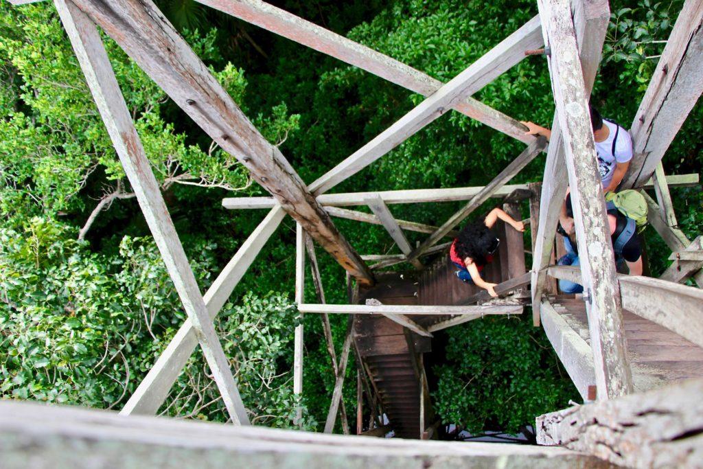 Montée tour observation réserve Sian Ka'an Tulum Mexique