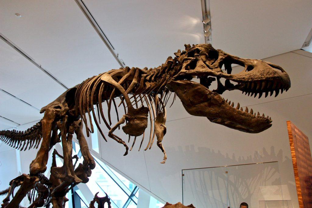 Dinosaure ROM Toronto